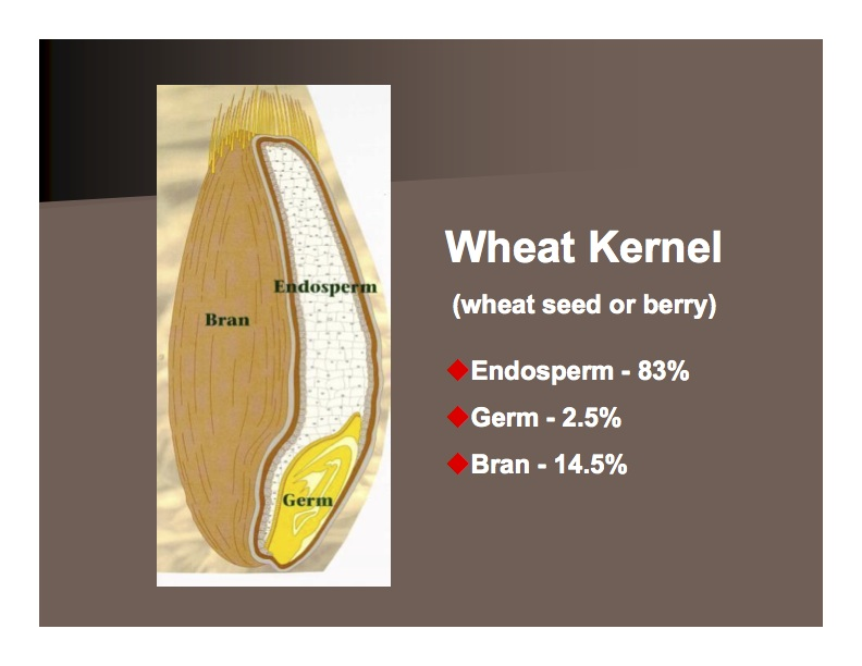 wheat kernel